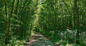 Majowe sprzątanie Lasu Wolickiego